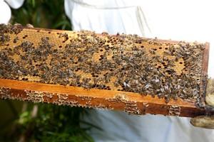 Atlanta Beekeepers | Georgia Beekeepers