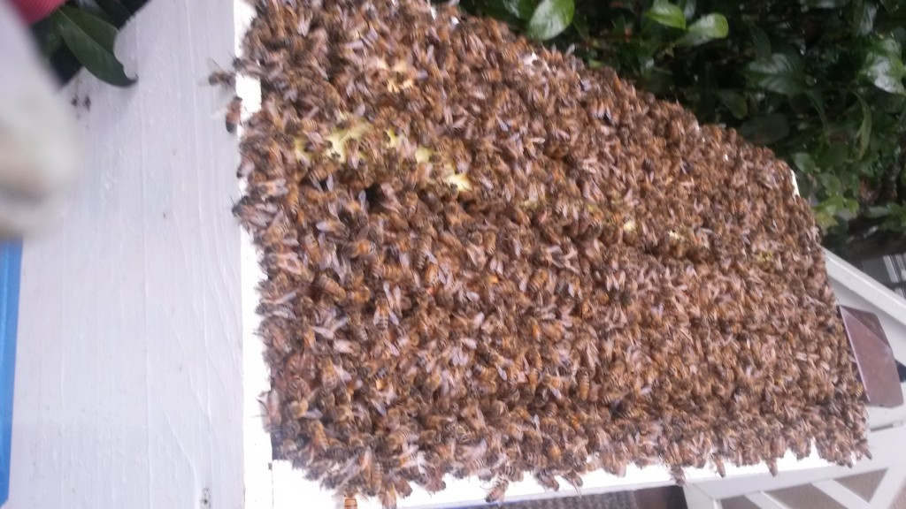 Swarm Removal in Roswell Ga